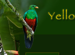 Quetzal Yellow house